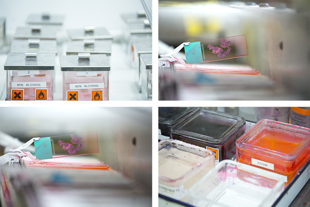 Histopathology labs